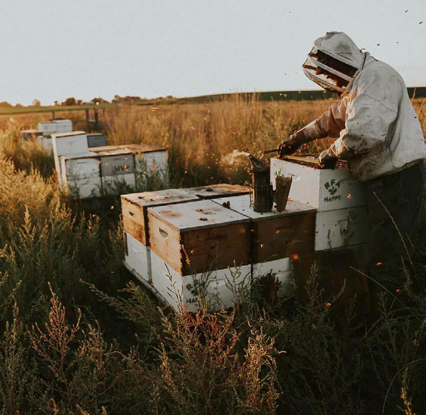 Local Hive beekeeper